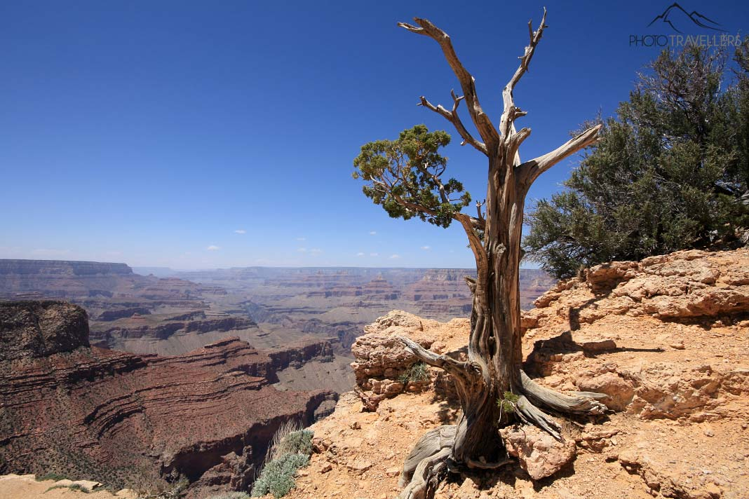 Einsamer Baum am Grand Canyon