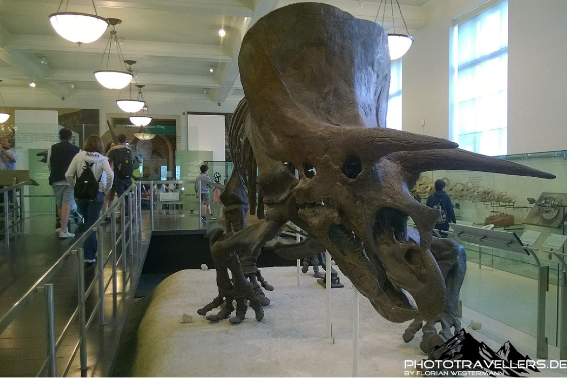 Naturhistorisches Museum New York