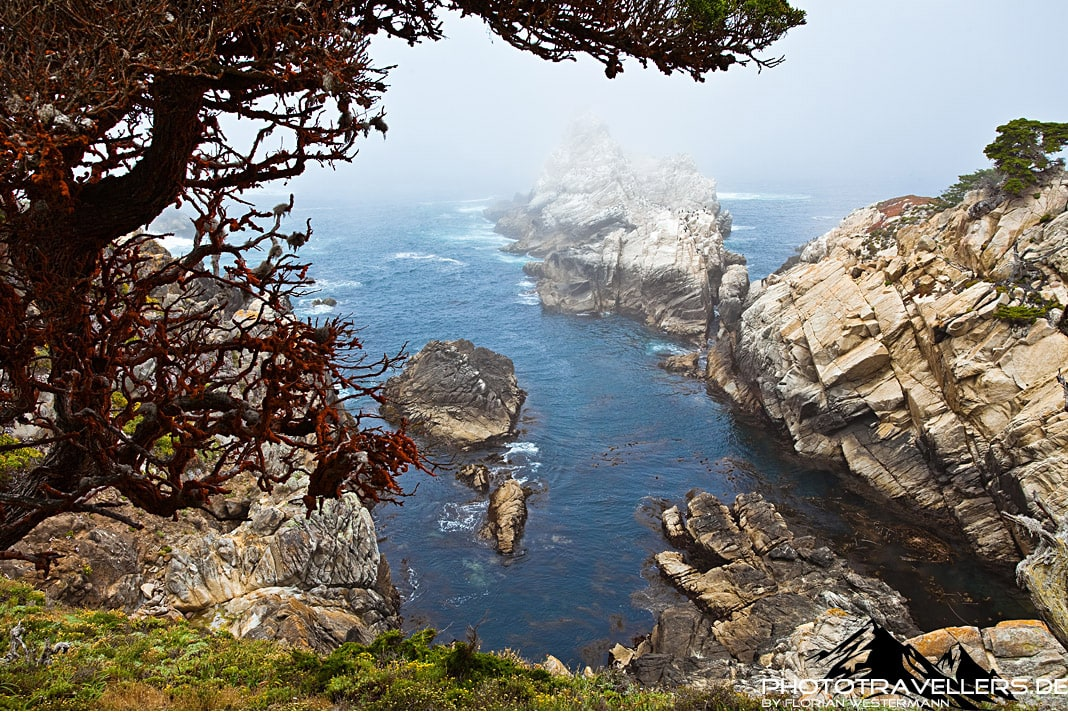 Point Lobos State Park2
