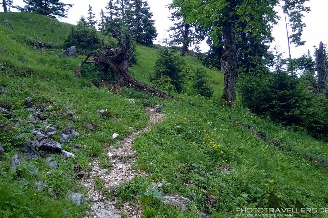 Wanderweg zum Säuling 2
