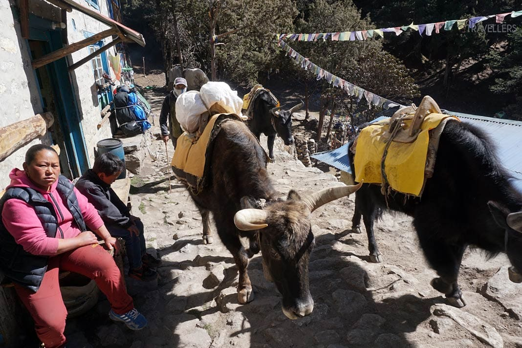 Yak-Transport