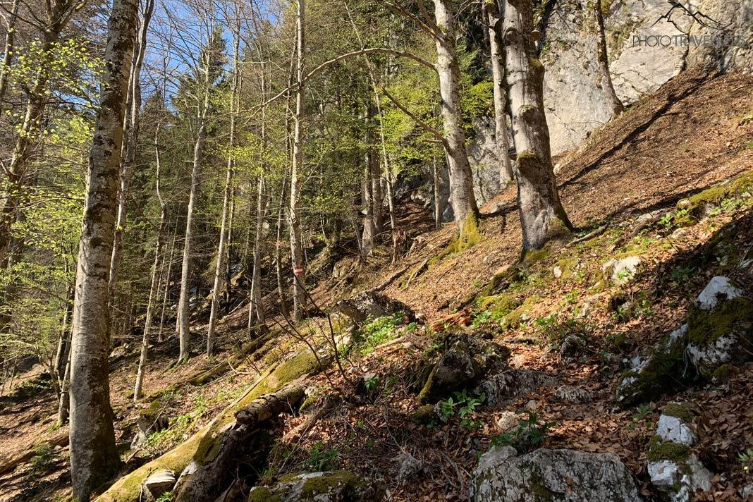 Wanderweg durchs Brünntal