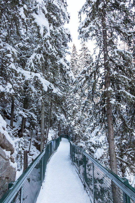 Verschneiter Wanderweg im Johnston Canyon