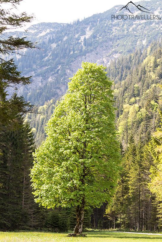 Grün leuchtender Baum im Wald
